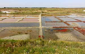 salt pan : La Saline Grand Champ